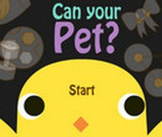 Play Can Your Pet