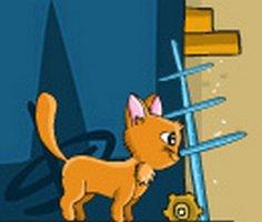 Damdaki Kedi