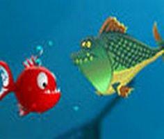 Balık Krizi