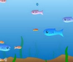 Büyüyen Balık 2