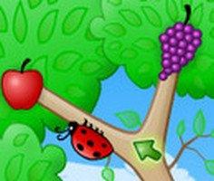 Meyve Böcekleri