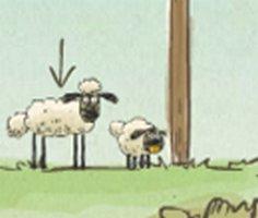 Koyunları Evine Götür