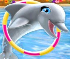 Yunus Balığı Gösterisi 6