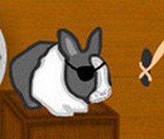 Korsan Tavşanı Kurtar