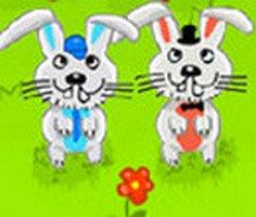 Kısa Bacaklı Tavşan